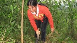 Tạo sinh kế lâu dài  cho người trồng rừng