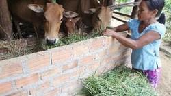 33 triệu USD giúp nông thôn Việt Nam