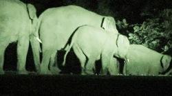 Đàn voi rừng tại Đăk Nông xuống khu dân cư phá nát hoa màu