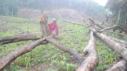 Dân chưa được hưởng lợi từ giao đất, giao rừng