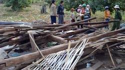 Vụ voi phá nhà dân ở Đăk Nông: Cục Kiểm lâm vào cuộc