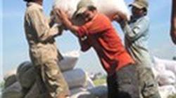 Giá gạo Việt Nam xuất khẩu đã cao hơn Thái Lan