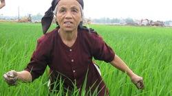 Nông dân Việt thời CNH-HĐH: Tiếng nói, quyền năng còn hạn chế