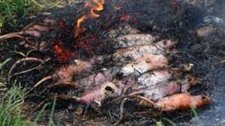 """Báo Tây """"choáng váng"""" vì đặc sản thịt chuột thui của Việt Nam"""