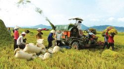 Tham gia TPP, nông nghiệp bị tổn thương nhiều nhất