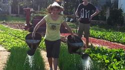 Khi Tây đến Việt Nam trồng rau và làm người Lô Lô