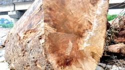 """""""Hốt"""" gỗ quý la liệt bám ven sông, dân thu hàng trăm triệu"""