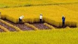 Bắc Giang: Cánh đồng mẫu cho lãi lớn