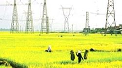 Nam Định: Giữ ổn định 75.000ha canh tác lúa
