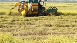An Giang: Ứng dụng ảnh viễn thám vào sản xuất lúa
