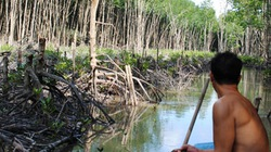 Thiệt hại hơn 1.700m3 gỗ
