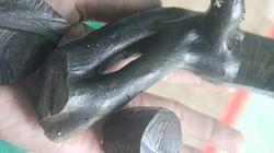 Ráo riết truy lùng san hô đen, cả chục thợ lặn bỏ mạng