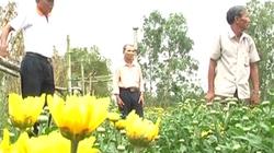 Hội Nông Dân Hòa Vang (Đà Nẵng): Nhận Huân chương Độc lập hạng Ba