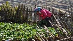 Nông dân thiệt hại nặng sau mưa tuyết