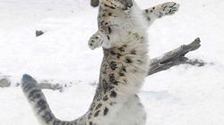 """Chùm ảnh báo luyện """"võ công"""" trong tuyết tuyệt đẹp"""