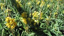 Nhiều vườn địa lan ở Đà Lạt nở hoa sớm