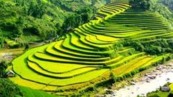 Ruộng bậc thang Sapa lọt tốp ruộng đẹp nhất thế giới