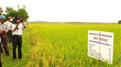 Can Lộc (Hà Tĩnh): Xây dựng 33 mô hình sản xuất hiệu quả
