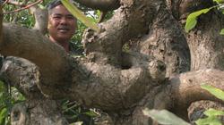 Người mang đam mê cây bạc tỷ đến xứ Thanh
