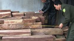 Quảng Trị: Bắt 2 vụ tàng trữ gỗ lậu quý hiếm