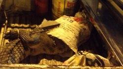 Hoảng hồn vì cá sấu bất ngờ... nhảy ra giữa đường