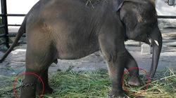 Vườn thú tàn độc nhất thế giới giết dần các động vật