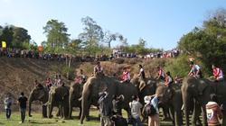 Sôi động đua voi ở Tây Nguyên