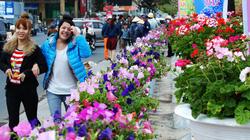 Tuần Văn hóa du lịch 2013 Đà Lạt: Đẩy mạnh giới thiệu làng hoa