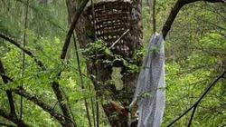 Lạ lùng khu rừng an táng trẻ bằng treo trên cây ở Cao Bằng
