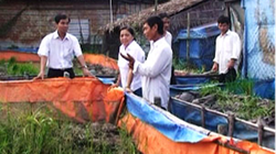 An Giang: 347 nông dân được học nghề