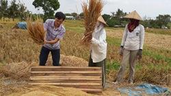 Sang Indonesia... đập lúa