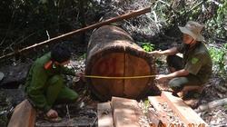 Chống người thi hành công vụ trong quản lý bảo vệ rừng: Ngày càng nghiêm trọng và phức tạp