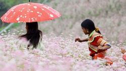 Tháng Mười, quyến rũ mùa hoa tam giác mạch