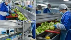 """""""Đột nhập"""" cơ sở làm salad siêu sạch: Nhìn mà xuýt xoa!"""