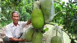 1001 cách làm ăn: Bảo quản hoa quả