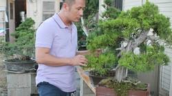 Bằng Kiều sở hữu vườn bonsai tiền tỷ ở Mỹ