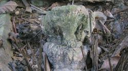 """Chuyện chiếc sọ """"linh thiêng"""" trong ngôi miếu ở bản Xuồng"""
