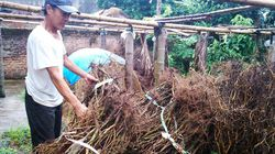 Vụ ăn chặn tiền hỗ trợ trồng ớt ở Hải Phòng: Cách chức chủ tịch, phó chủ tịch xã