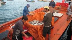 Triển khai Nghị định 67: Hướng dẫn chi tiết để ngư dân làm đúng