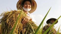 Thể lệ Cuộc thi viết Tự hào nông dân Việt Nam (2014-2015) trên báo NTNN