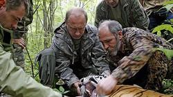 Con hổ của Tổng thống Putin bất ngờ vượt biên từ Nga sang Trung Quốc