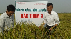 Bắc thơm 9 -  ruộng đồng ngát hương