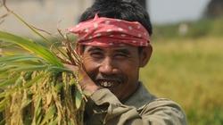 Sức sáng tạo vô tận của nông dân Việt