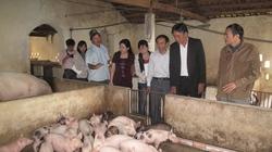 Quỹ Hỗ trợ nông dân: Tiếp sức cho khát vọng làm giàu