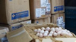 Không có quy định chỉ cấp phép trong 1 ngày cho quả trứng