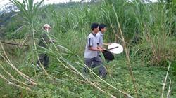Quảng Nam: Xuất hiện đàn voi rừng tấn công người dân