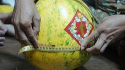 Tận ngắm quả dưa lạ ở Đồng Tháp, 9 tháng không hỏng, ngày càng to lên