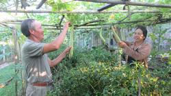 Nông dân tham gia tổ hợp tác: Hỗ trợ đầu vào,  yên tâm đầu ra