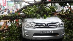 TP.HCM: Sau mưa dông, cây cổ thụ đổ la liệt khắp phố