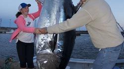 Cô bé bắt gọn cá ngừ khổng lồ nặng 280 kg được thưởng lớn